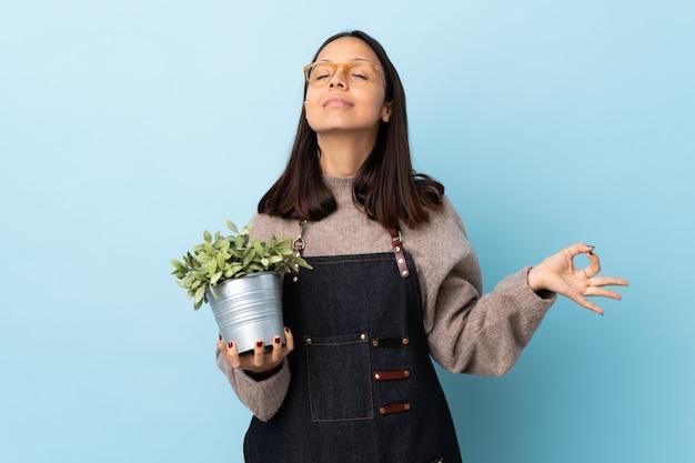 Mulher jovem morena de raça mista, segurando uma planta sobre parede azul isolada em pose de zen Foto Premium