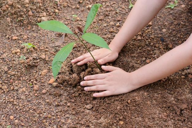 Mulher, mãos, plantar, a, árvore jovem Foto Premium