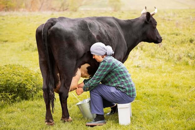 Mulher ordenha a vaca Foto Premium