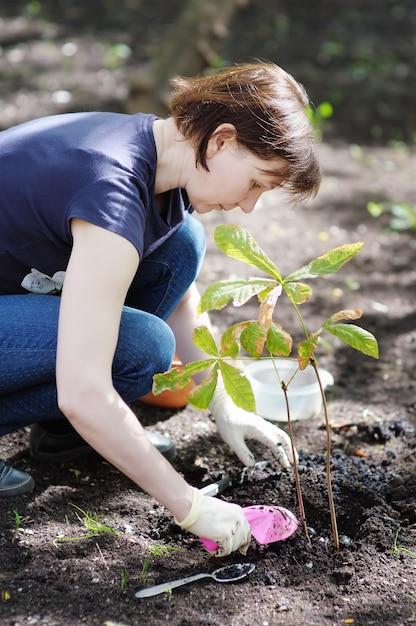 Mulher, plantar, jovem, seedling, (chestnut), foco, ligado, mulher Foto Premium