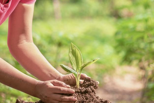 Mulher, protegendo, jovem, verde, seedling, em, solo, contra, fundo desfocado Foto Premium