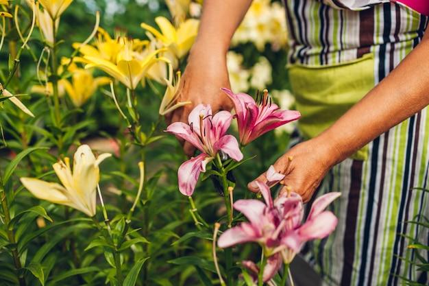 Mulher sênior, reunião, flores, em, jardim Foto Premium