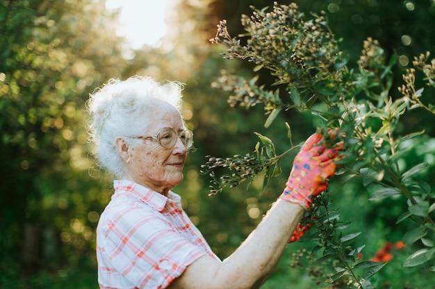 Mulher sênior, tendendo, para, a, flores, em, dela, jardim Foto Premium