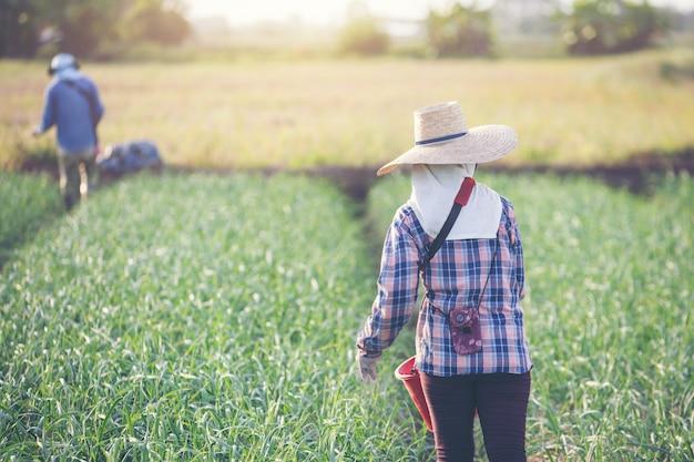 Mulheres jardineiras estão fertilizando o jardim de cebola Foto gratuita