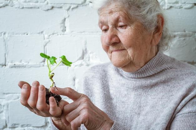 Mulheres voluntárias segurando o crescimento da planta Foto Premium