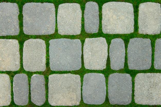 Musgo verde cresce entre tijolos no caminho Foto Premium