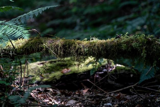 Musgo verde na floresta, coberto de troncos Foto Premium