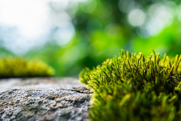 Musgo verde na natureza para o fundo Foto Premium