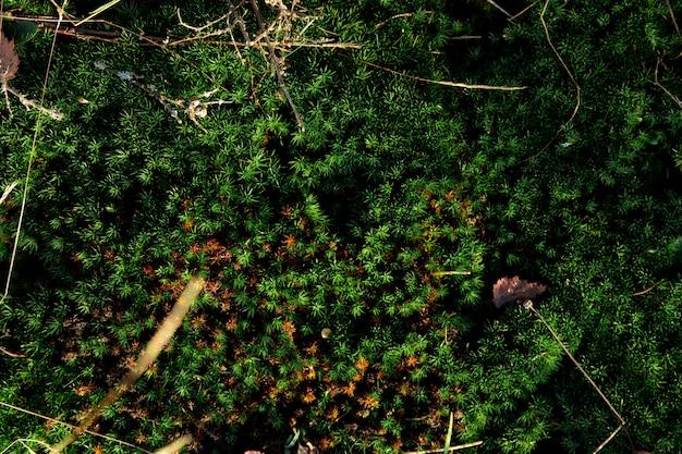 Musgo verde no chão, textura de terra musgosa. Foto Premium