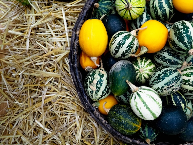 Na cesta há pequenas melancias, melões e abóboras. colheita de outono Foto Premium
