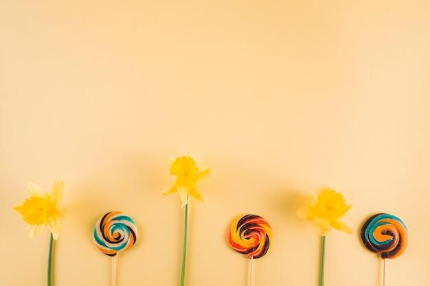 Narciso amarelo e pirulito colorido do redemoinho no contexto bege Foto gratuita