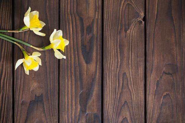 Narciso amarelo sobre fundo escuro de madeira Foto Premium