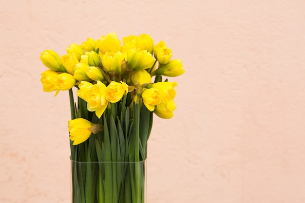 Narcisos amarelos fundo Foto Premium