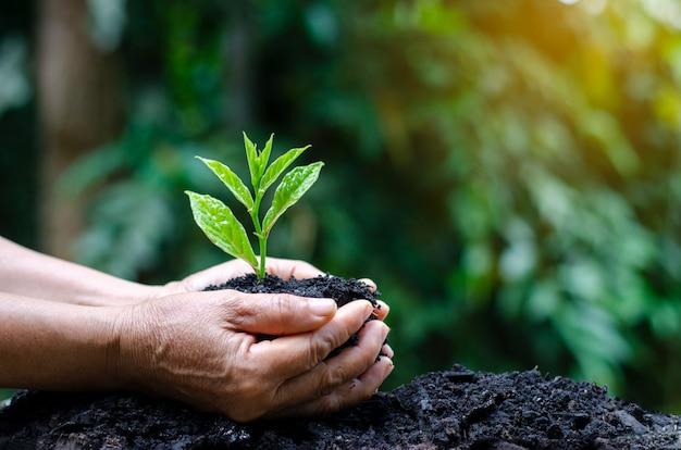 Nas mãos de árvores que crescem mudas. bokeh fundo verde feminino mão segurando árvore Foto Premium