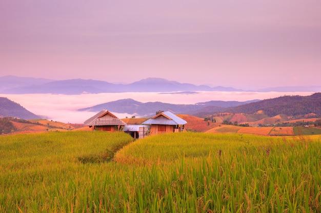 Nascer do sol em terraços de arrozal em mae-jam village, província de chiang mai, tailândia Foto Premium