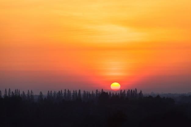 Nascer do sol no campo com o pinheiro da silhueta na floresta. Foto Premium