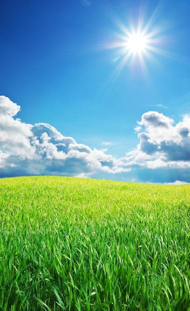 Nascer do sol no prado grean Foto Premium