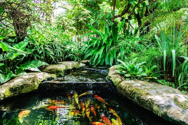 Natação extravagante da carpa ou dos peixes de koi na lagoa. aquático com jardim ornamental. Foto Premium
