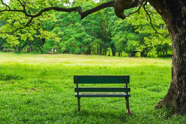Natureza bonita no parque com o banco sob a árvore. Foto Premium