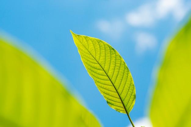 Natureza da folha verde com filial na natureza do céu azul Foto Premium