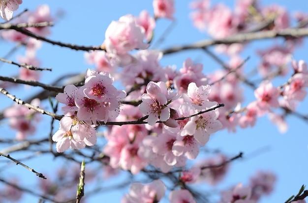flores jardim primavera:Spring Flower Blossom