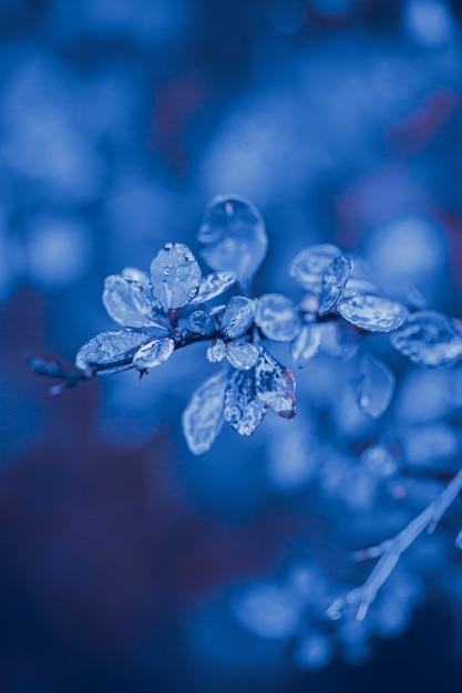 Natureza folhas água gotas azul cor tom Foto Premium