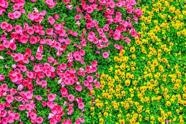 Natureza laranja jardim folha público branco Foto gratuita