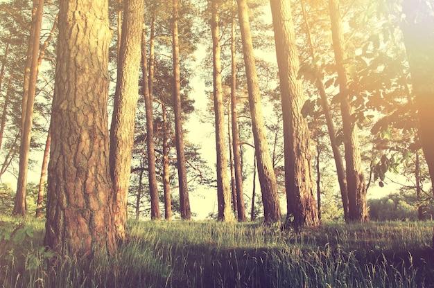 Natureza na floresta no verão. Foto gratuita