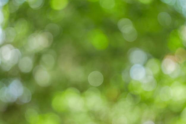 Natureza verde abstrata ensolarada Foto Premium