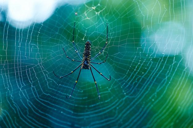 Nephila pilipes é a aranha perigosa do sri lanka Foto Premium
