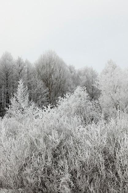 Neve fotografada no inverno, que apareceu após uma nevasca. fechar-se, Foto Premium