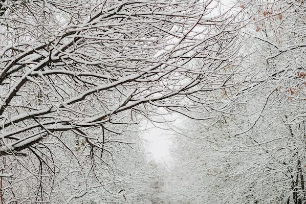 Neve nos galhos no inverno Foto Premium