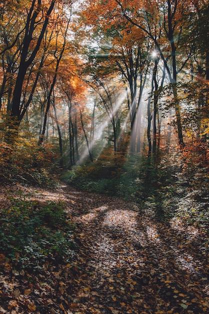 Névoa da manhã na floresta Foto Premium