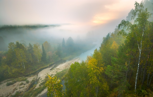 Nevoeiro intenso nos córregos do cervo do parque nacional Foto Premium