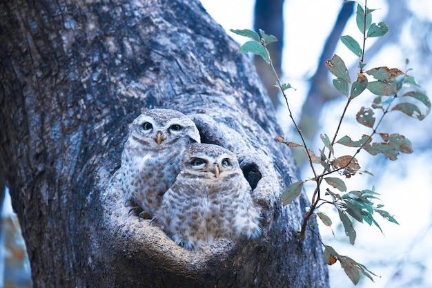 Ninho de coruja em uma árvore Foto Premium