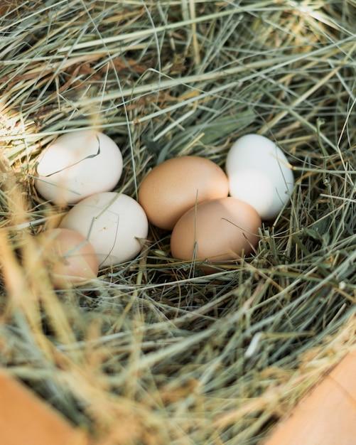 Ninho de palha cheio de ovos brancos e marrons Foto gratuita