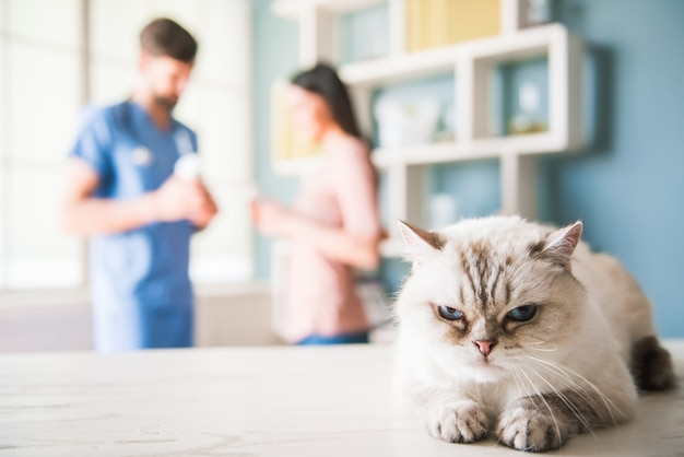No veterinário Foto Premium