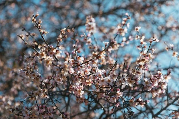Numerosas flores brancas em galhos Foto gratuita