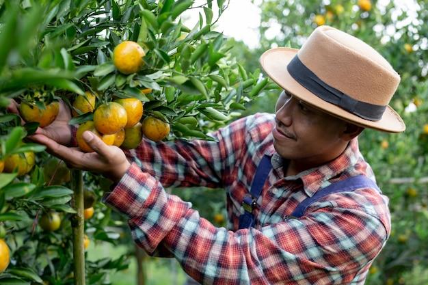 O agricultor está coletando laranja Foto gratuita