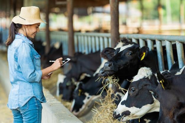 O agricultor tem detalhes de gravação no tablet de cada vaca na fazenda. Foto Premium