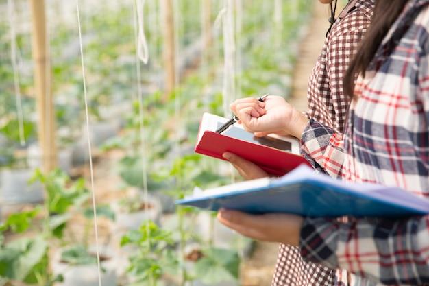 O agrônomo examina as mudas de melão em crescimento na fazenda, agricultores e pesquisadores na análise da planta. Foto gratuita