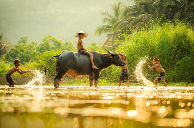 O amigo de meninos feliz engraçado jogando água e búfalo animal água no rio Foto Premium
