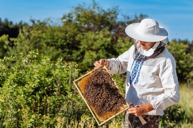 O apicultor tem uma célula de mel com abelhas nas mãos. apicultura. apiário Foto Premium