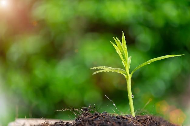 O broto verde de mudas estão crescendo no solo em bokeh verde Foto Premium