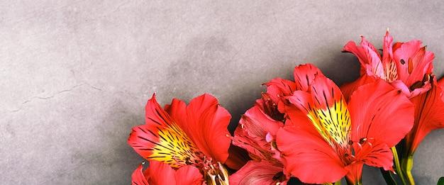 O buquê de orquídeas é lindo, fresco, vermelho brilhante sobre um fundo cinza. as flores são grandes, suculentas e perfumadas. layout para uma saudação ou cartão. Foto Premium