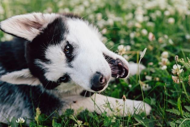 Cachorro em jardim