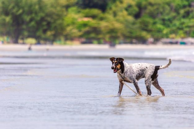 O cachorro está brincando na praia. Foto Premium