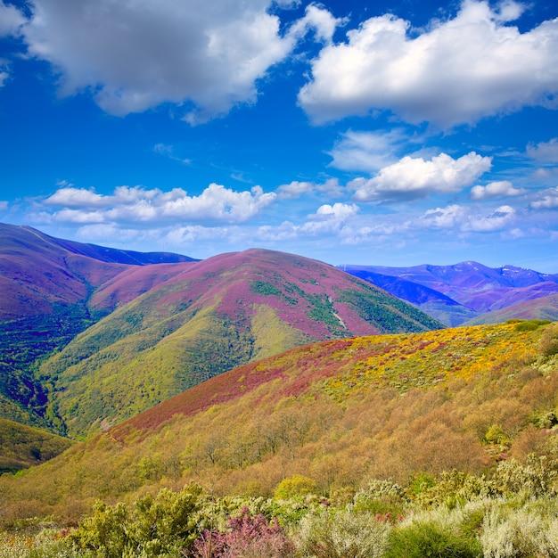 O caminho de saint james em leon montanhas rosa Foto Premium