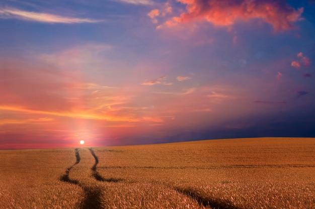 O campo ao pôr do sol Foto gratuita