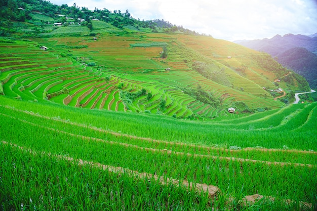O campo de almofada e a montanha terraced bonitos da arroz ajardinam em mu cang chai e em sapa vietnam. Foto Premium